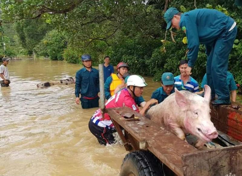 Những hình ảnh ngập lũ tại tỉnh Đồng Nai - ảnh 3