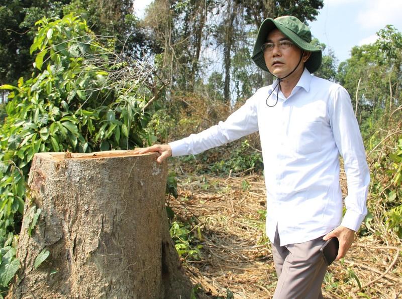 Lãnh đạo Đồng Nai kiểm tra vùng cây bị đốn ở khu bảo tồn - ảnh 2