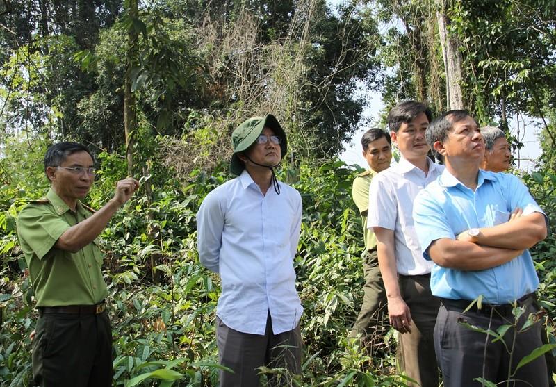 Lãnh đạo Đồng Nai kiểm tra vùng cây bị đốn ở khu bảo tồn - ảnh 1