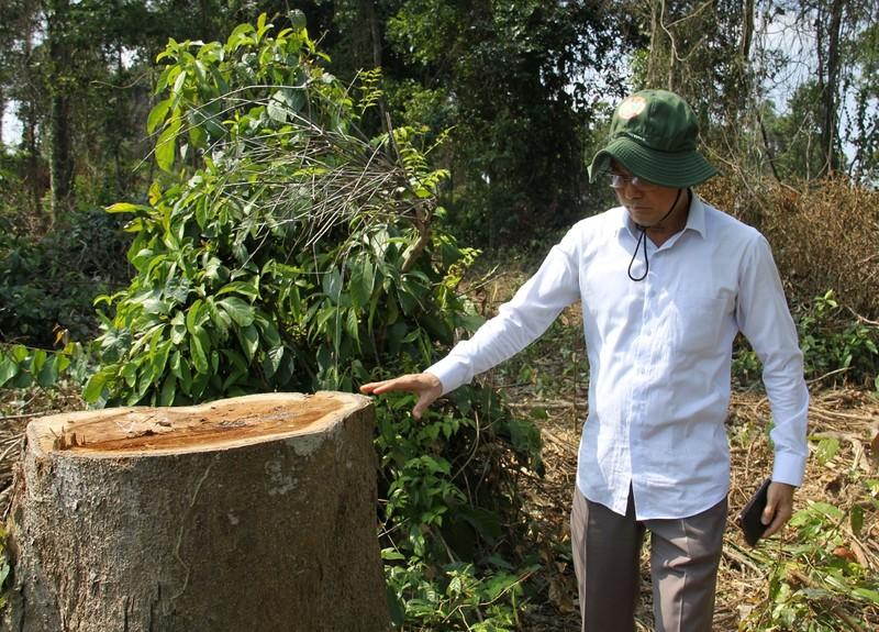 Lãnh đạo khu bảo tồn ở Đồng Nai nói về việc cây rừng bị hạ - ảnh 2