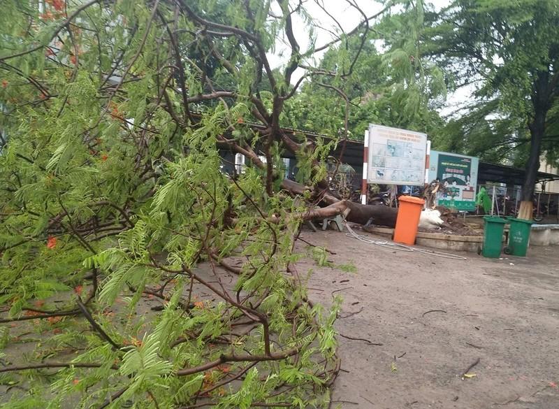 Đồng Nai: Cây phượng đổ trong sân trường, 3 nữ sinh xây xát  - ảnh 1