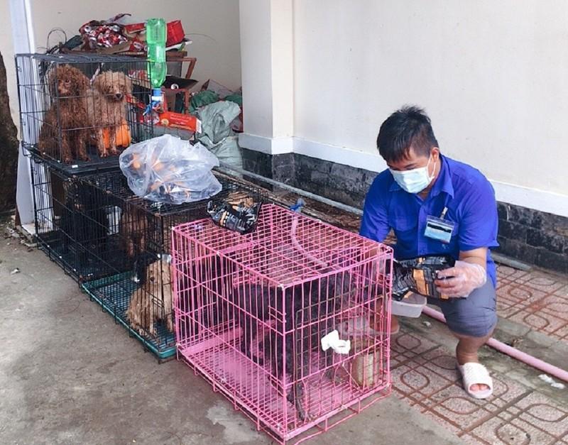 Cán bộ phường ở Đồng Nai chăm sóc giúp 12 con chó khi chủ bị nhiễm COVID - ảnh 1