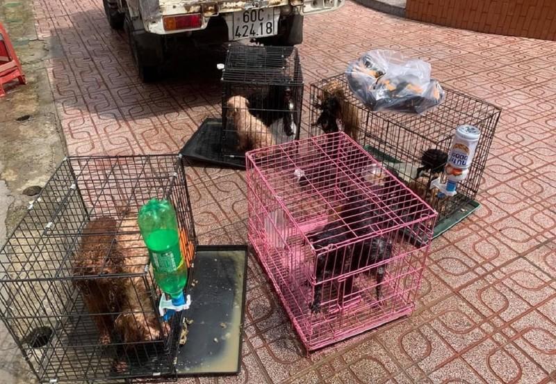 Cán bộ phường ở Đồng Nai chăm sóc giúp 12 con chó khi chủ bị nhiễm COVID - ảnh 2