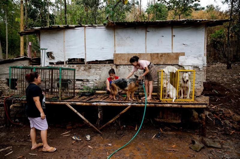 'Adu Bagong', lợn rừng và đấu trường sinh tử đẫm máu - ảnh 8