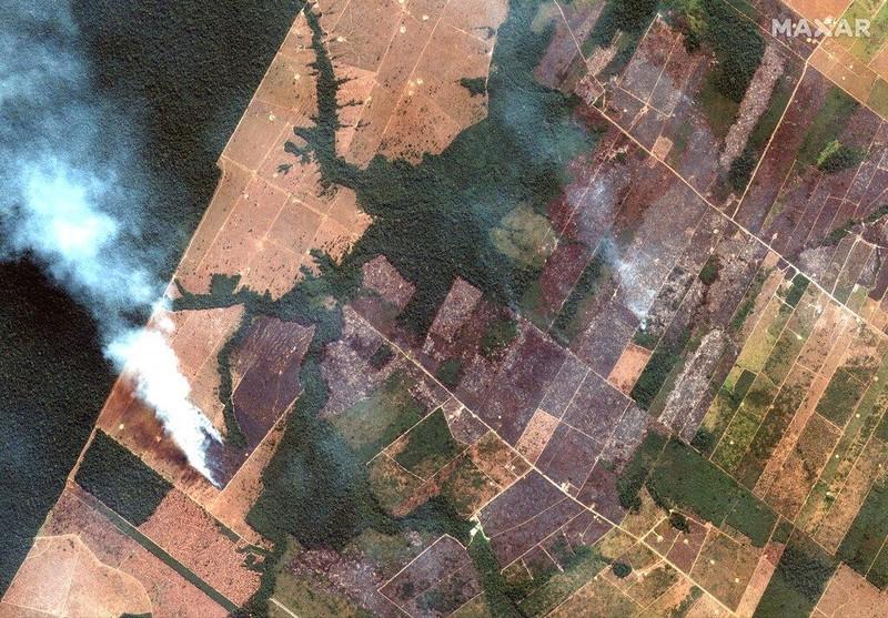 Các ngôi sao thể thao đang 'ngăn' cháy rừng Amazon - ảnh 3