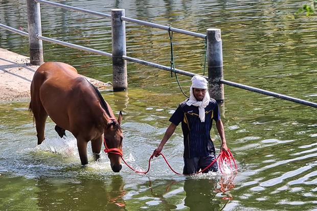 Virus mới giết 42 ngựa đua ở Korat - ảnh 1