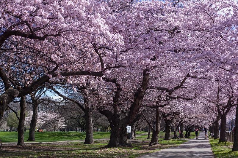 Tận hưởng mùa xuân tại Nam Bán cầu - ảnh 5