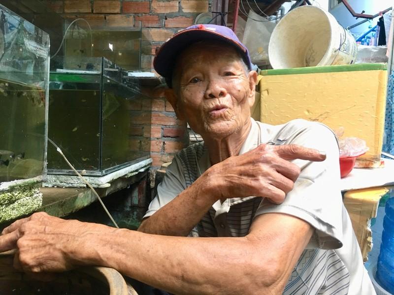 Cụ ông 70 năm đam mê cá lia thia - ảnh 2