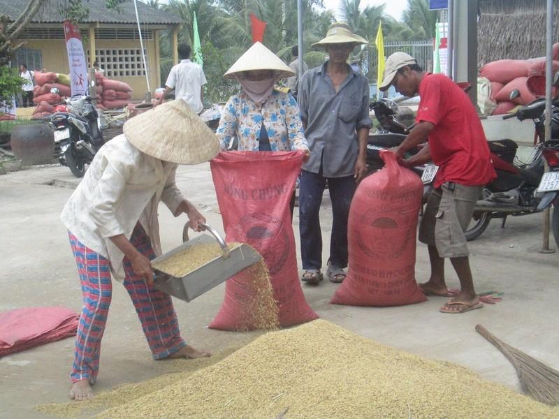 Cần Thơ:Lúa hè thu sắp thu hoạch, gạo còn tồn trên 359.000 tấn - ảnh 1