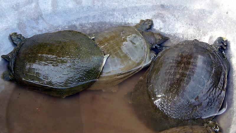 7 loại hải sản có thể gây chết người bạn phải biết - ảnh 7