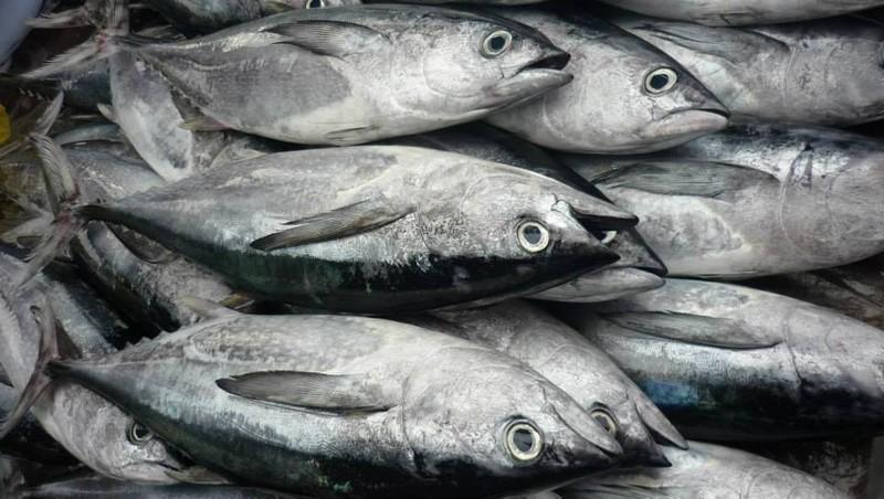 7 loại hải sản có thể gây chết người bạn phải biết - ảnh 2