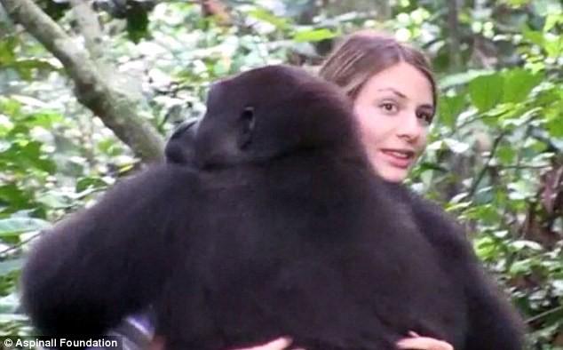 """""""Đoàn tụ"""" cảm động của cô gái với khỉ đột sau 10 năm - ảnh 2"""