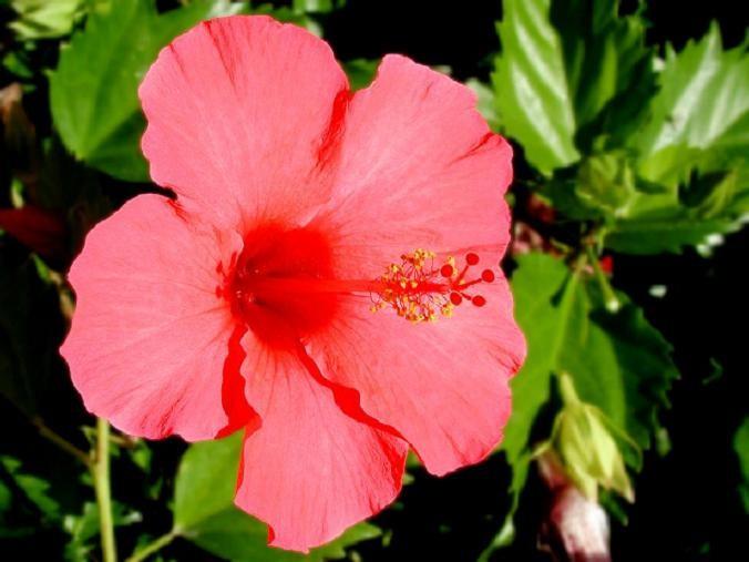 Bí quyết làm đẹp bằng hoa của Ấn Ðộ - ảnh 2