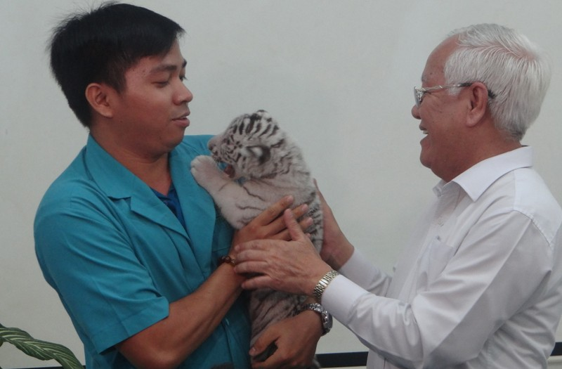 Thực hư hổ ở Thảo Cầm Viên Sài Gòn bị bỏ đói, tê giác bị mài sừng - ảnh 3