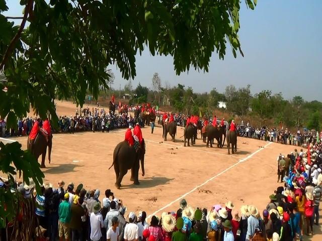 18 chú voi Buôn Đôn thi đá bóng trong lễ hội truyền thống - ảnh 1
