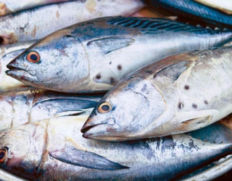 Cá nhiều mỡ hỗ trợ giảm huyết áp, giảm đông máu, tăng miễn dịch