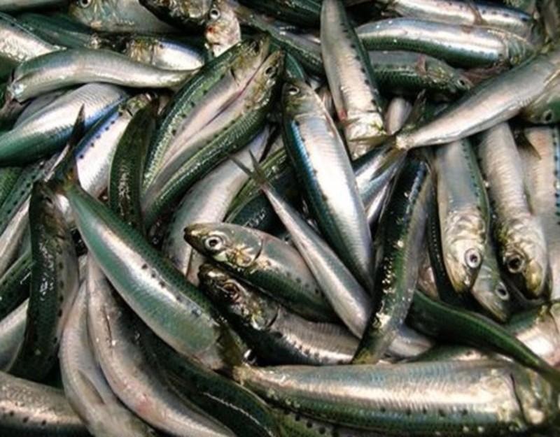 Cá mòi là một trong những loại cá giàu omega-3