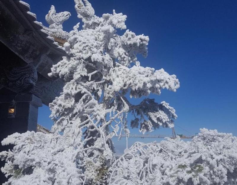 tuyết mùa đông sa pa