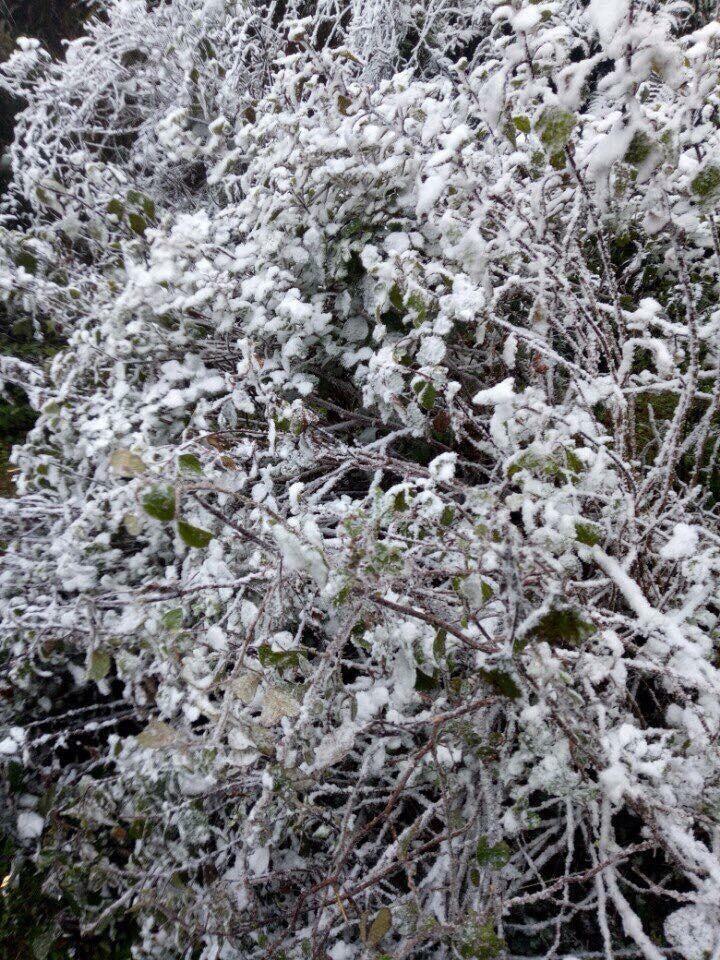 Ngắm tuyết rơi dày, phủ trắng đường ở Sa Pa - ảnh 5
