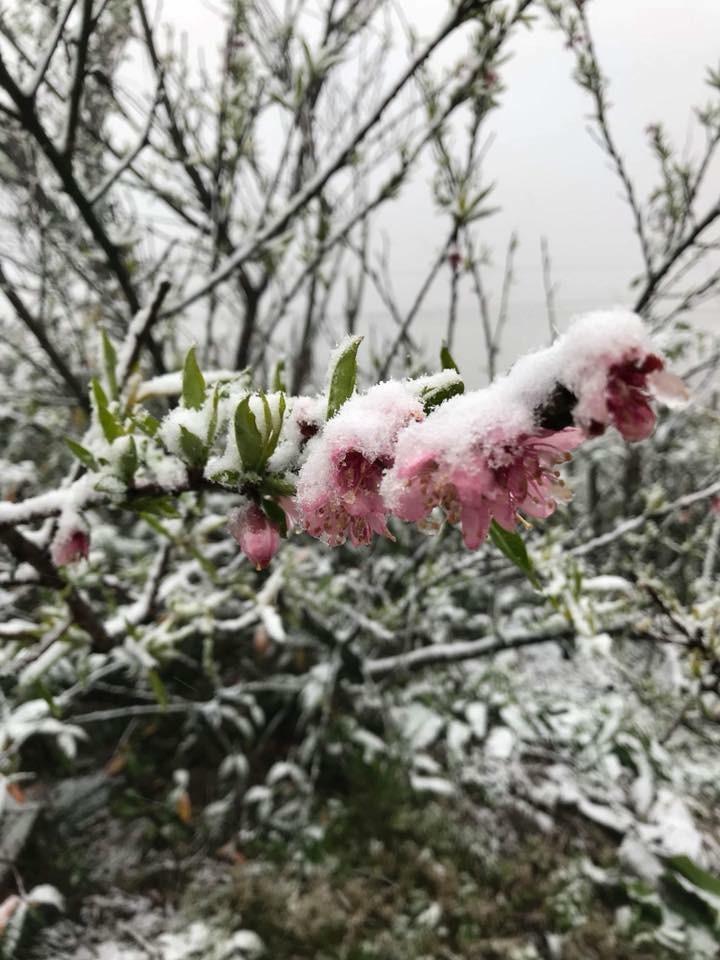 Ngắm tuyết rơi dày, phủ trắng đường ở Sa Pa - ảnh 3