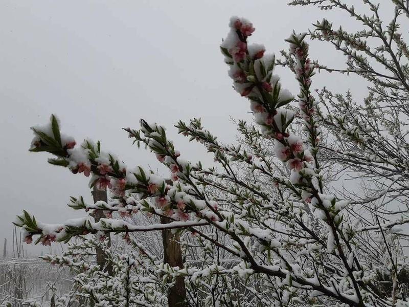Ngắm tuyết rơi dày, phủ trắng đường ở Sa Pa - ảnh 4