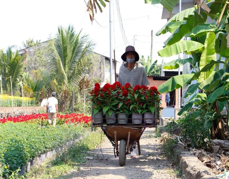 Hiện giá tại vườn của hoa cúc dao động khoảng 40.000 đồng/cặp, hoa cúc vạn thọ khoảng 22.000 đồng/cặp, hoa cát tường giá khoảng 70.000 đồng/cặp, hoa mào gà giá khoảng 22.000 đồng/cặp,…