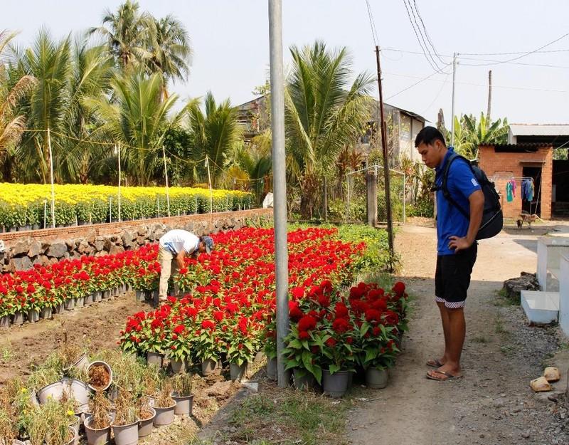 Dịp này không chỉ nhà vườn bận rộn mà người dân xung quanh cũng vui vì họ có thêm công việc kiếm tiền xài tết như trông hoa, chăm sóc hoa, bưng vác hoa lên xe,...