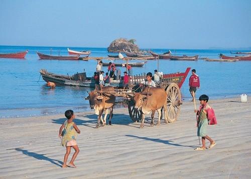 Côn Đảo vào tốp 10 bãi biển thân thiện với môi trường - ảnh 4