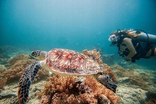 Côn Đảo vào tốp 10 bãi biển thân thiện với môi trường - ảnh 3