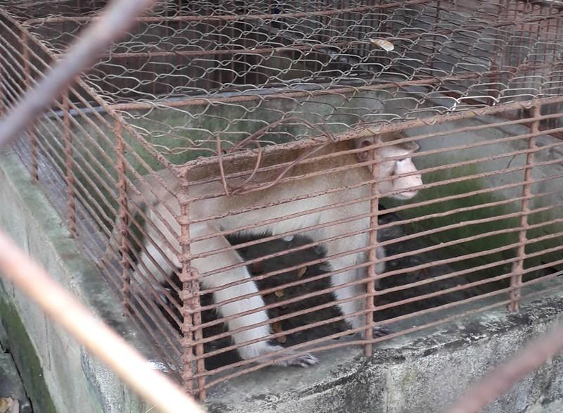 Thực hư thú nuôi bị ngược đãi ở Công viên nước Củ Chi - ảnh 1