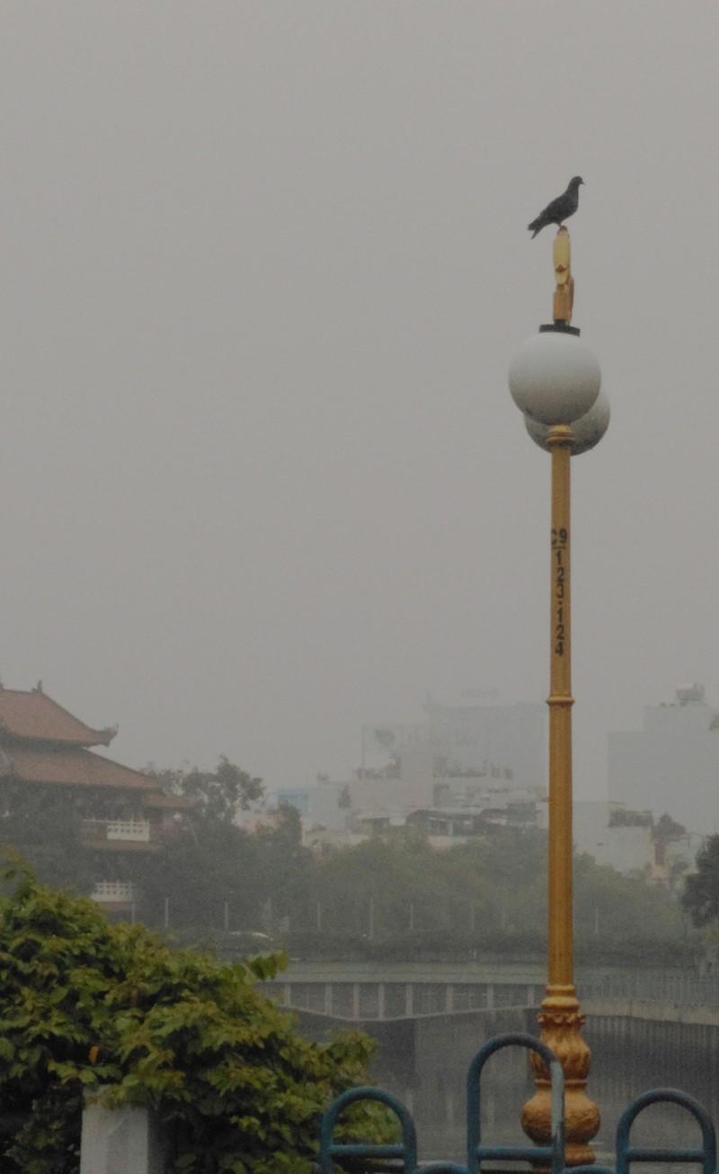 Sài Gòn bảng lảng sương mù - ảnh 3