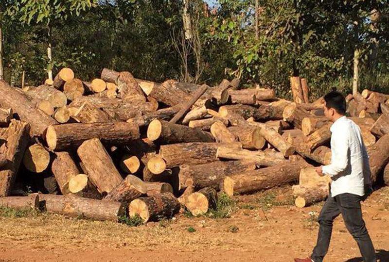 Chủ tịch xã nhận tiền bảo kê việc phá rừng - ảnh 2