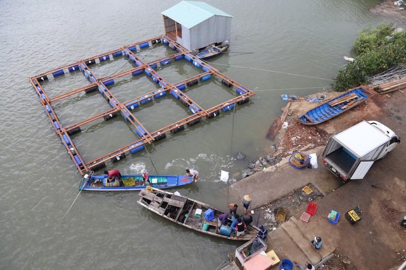 Dân làng bè Long Sơn vẫn chưa rời khu vực để tránh bão số 9 - ảnh 2
