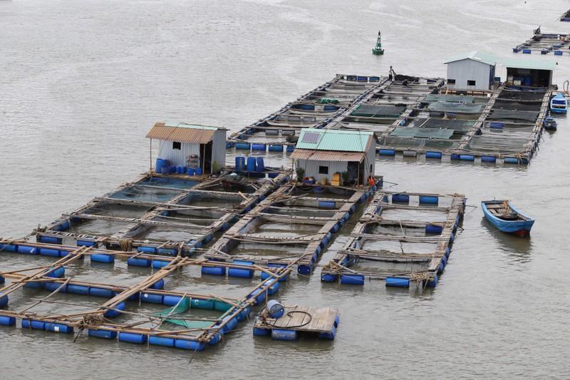 Dân làng bè Long Sơn vẫn chưa rời khu vực để tránh bão số 9 - ảnh 5