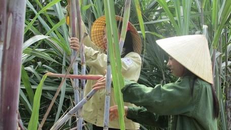 Hai chị em Hương và Hà đang cùng phụ giúp bố mẹ làm vườn