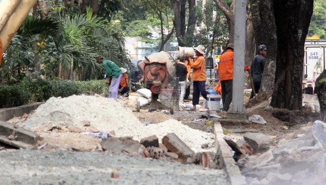 Đốn hạ 116 cây xanh cửa ngõ sân bay Tân Sơn Nhất  - ảnh 3