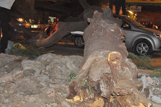 Dừng đèn đỏ, hai ô tô bị cây cổ thụ ngã đè móp méo - ảnh 1