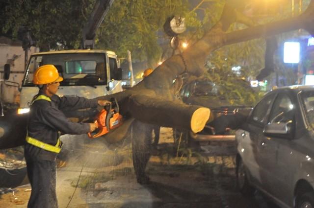 Dừng đèn đỏ, hai ô tô bị cây cổ thụ ngã đè móp méo - ảnh 2