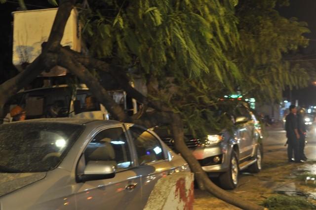 Dừng đèn đỏ, hai ô tô bị cây cổ thụ ngã đè móp méo - ảnh 3