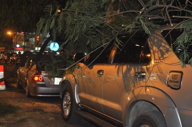 Dừng đèn đỏ, hai ô tô bị cây cổ thụ ngã đè móp méo - ảnh 4