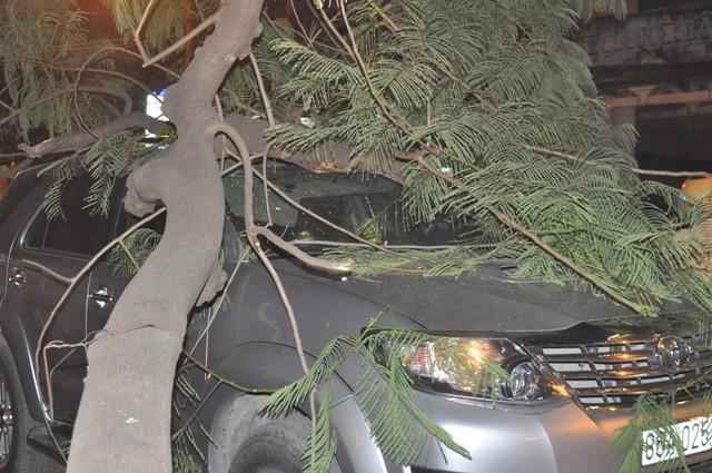 Dừng đèn đỏ, hai ô tô bị cây cổ thụ ngã đè móp méo - ảnh 5