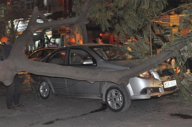 Dừng đèn đỏ, hai ô tô bị cây cổ thụ ngã đè móp méo - ảnh 7