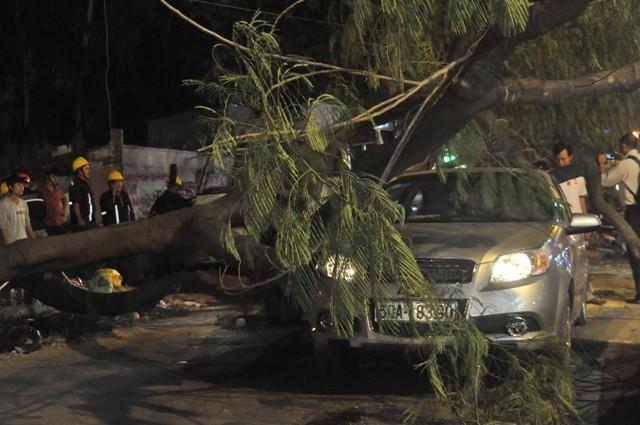 Dừng đèn đỏ, hai ô tô bị cây cổ thụ ngã đè móp méo - ảnh 8