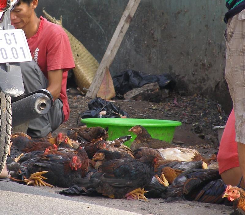 Buôn bán gà trống choai nhộn nhịp mùng ba Tết - ảnh 1