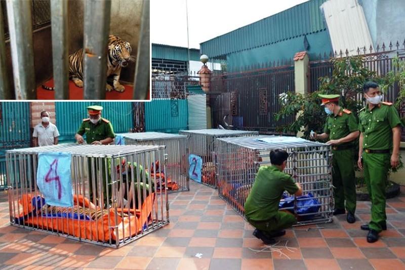 Ai chi trả 600 triệu/tháng để nuôi 9 con hổ ở Nghệ An? - ảnh 1