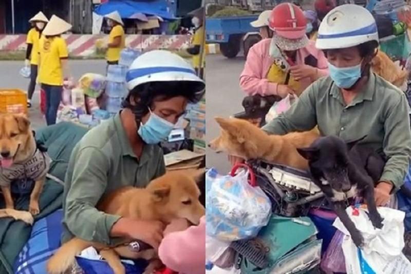 Lý, tình trong vụ tiêu hủy 13 chú chó ở Cà Mau - ảnh 1