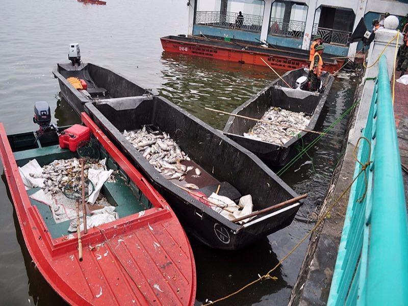 cá chết hồ tây