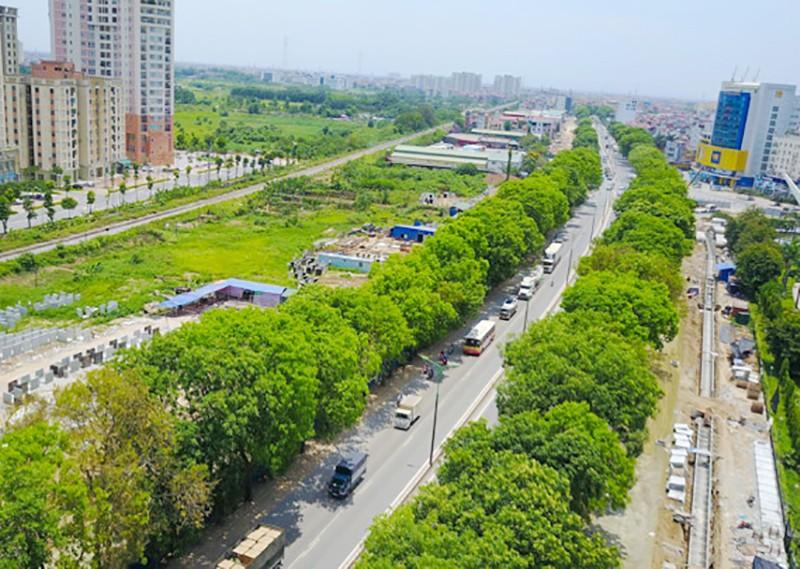 Hà Nội: Bất khả kháng mới chặt cây đường Phạm Văn Đồng - ảnh 1