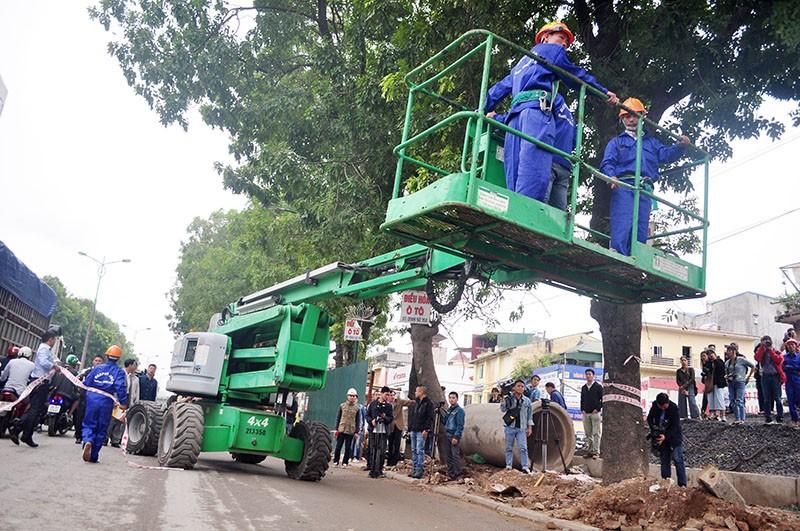 Chặt hạ, di dời 1.159 cây xanh ở phố Phạm Văn Đồng - ảnh 1