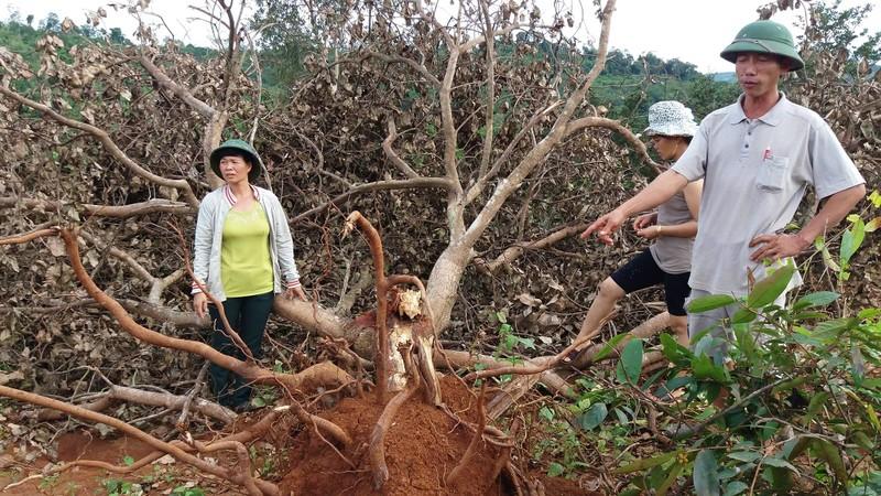 Vụ nổ súng ở Đắk Nông: Tạm giam GĐ Công ty Long Sơn - ảnh 1